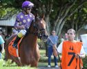 Awesome Feather (FL) with jockey Jeffrey Sanchez heads to the post parade with trainer Stanley I Gold looking on